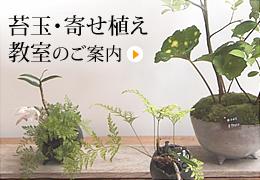 苔玉・寄せ植え教室のご案内